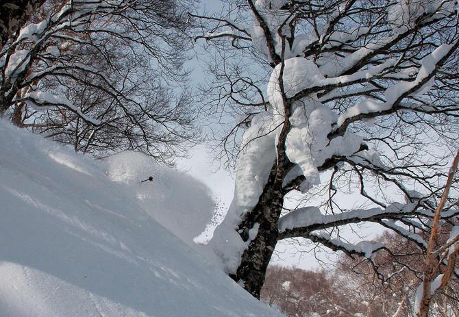Сноусерфинг в Японии, январские каникулы 2021. #iponepow