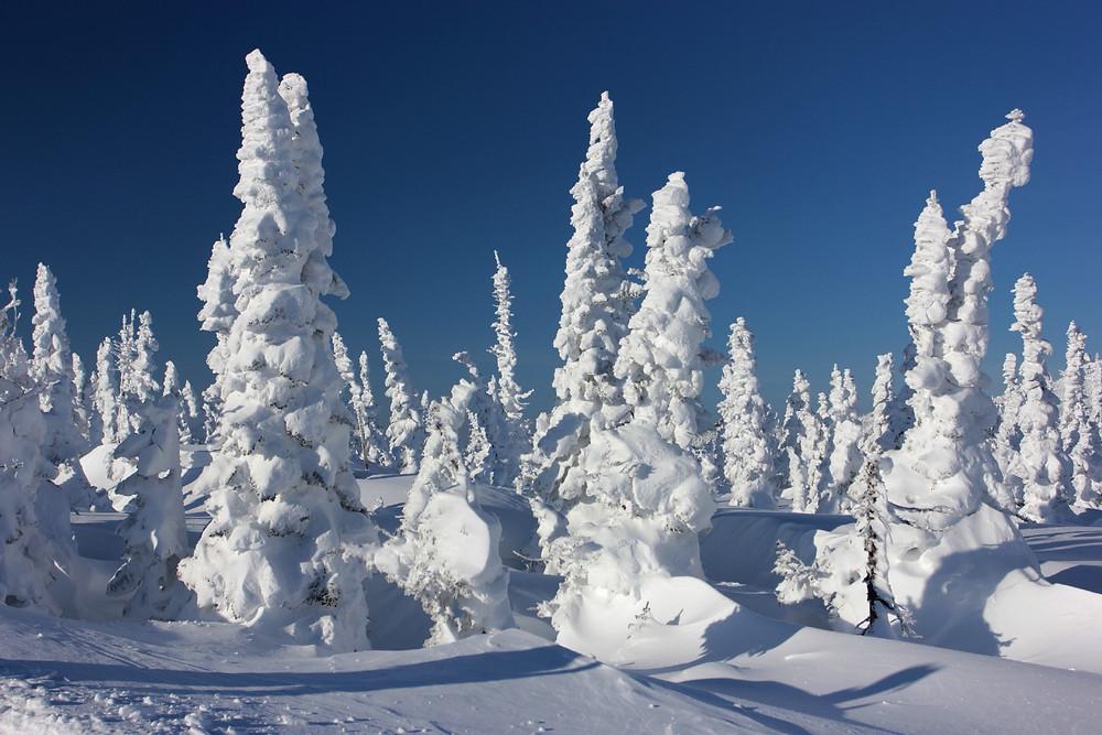 Школа фрирайда на сноуборде в Шерегеше