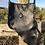 Thumbnail: Labradorite Black Dream