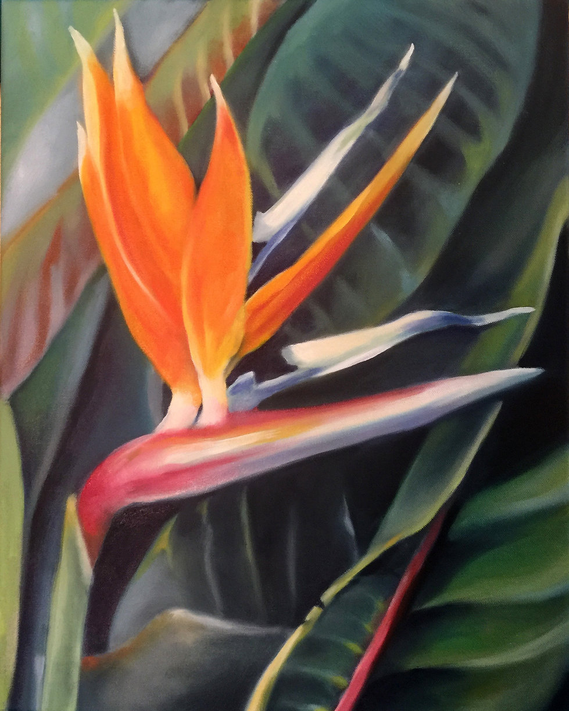 "Bird of Paradise3  original oil on canvas 16x20"""