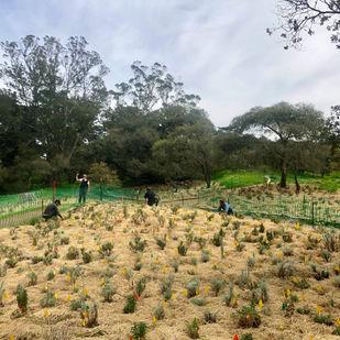 Oak Woodlands of Golden Gate Park