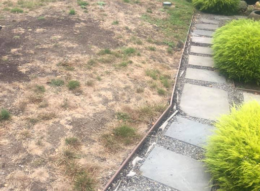 Converting a Degraded Lawn