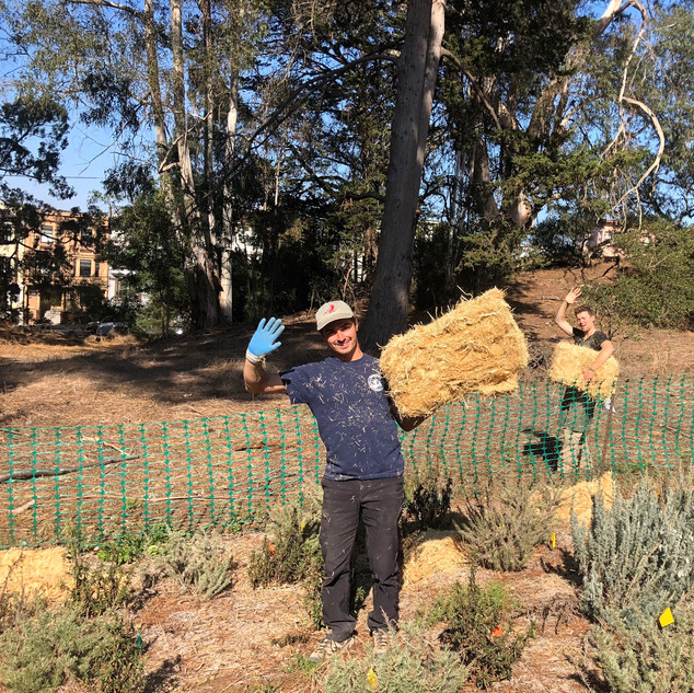 Spreading Hay in Golden Gate Park