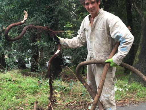 Poison Oak Removal