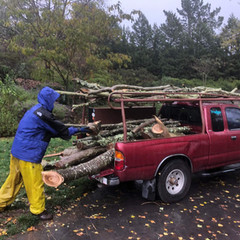 Removal of Large Woody Debris