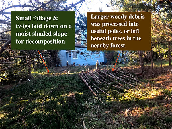 Felled Trees 3.jpg