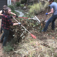 Large Scale Invasive Plant Removal
