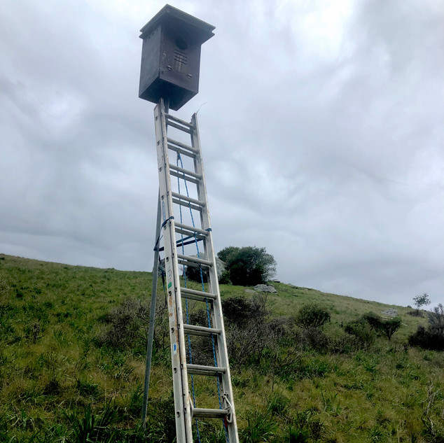 Barn Owl Box Installation & Cleaning