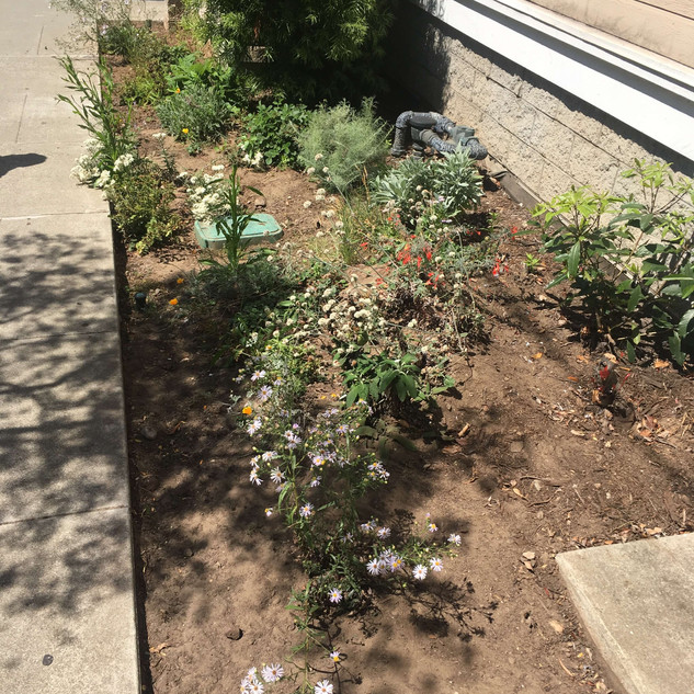 Drought Tolerant Native Pollinator Plantings