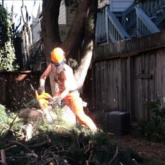 Pine Tree Breakdown