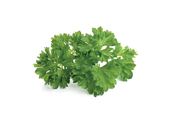 Parsley - Giant of Italy