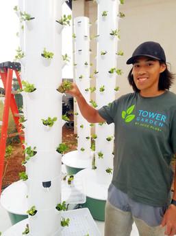 First Tower Farm seedlings!