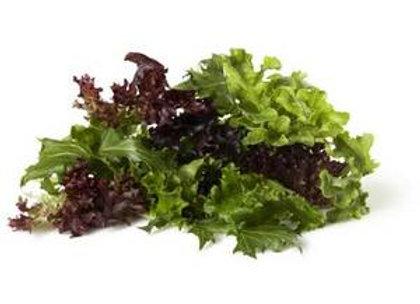 Lettuce - Gourmet Blend