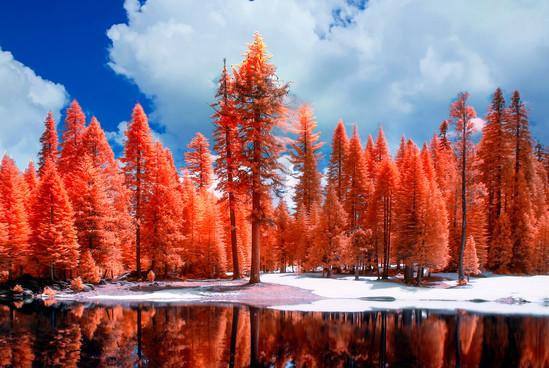 Website_Landscapes_03.jpg