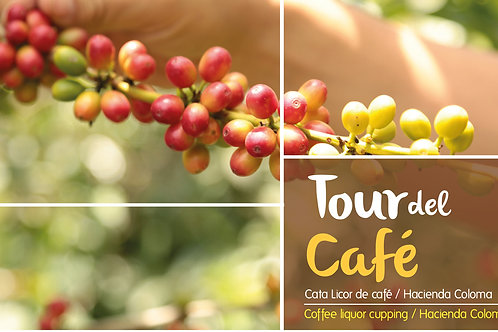 Tour del Café / Coffee Tour