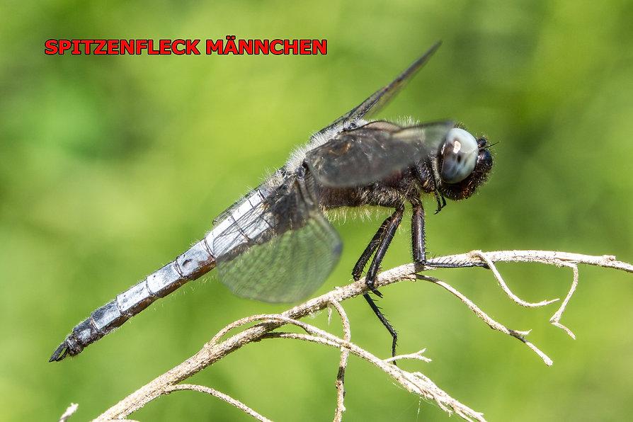 M700Bwix - Spitzenfleck - Laibacher Moor