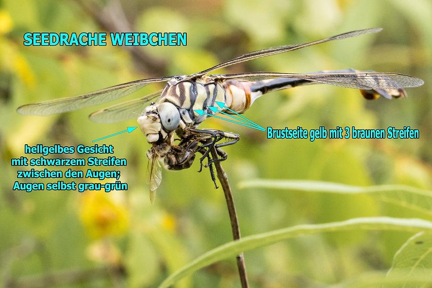 W200Bwix - Seedrache - 22.06.2017 - HuBl
