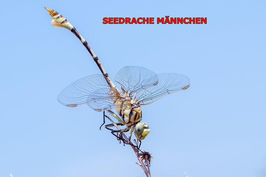 M200Bwix - Seedrache, Shkadarsee, Albani