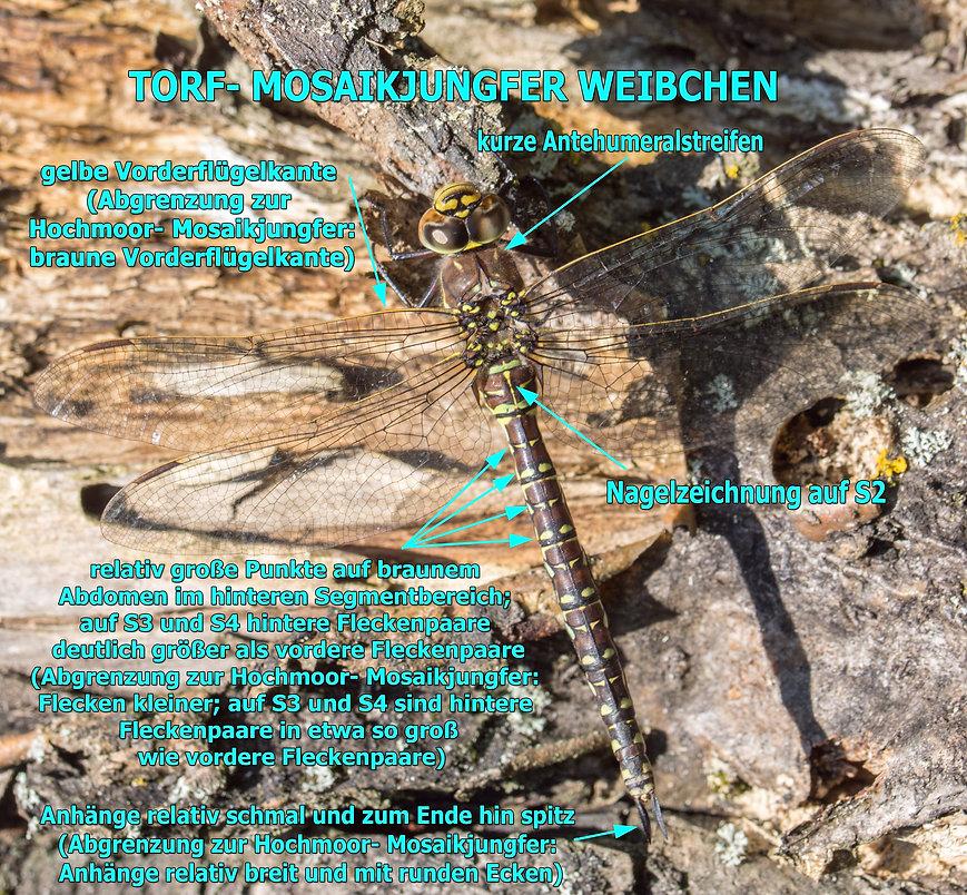 297- Torf - Mosaik - 11.09.2020 - Müglit