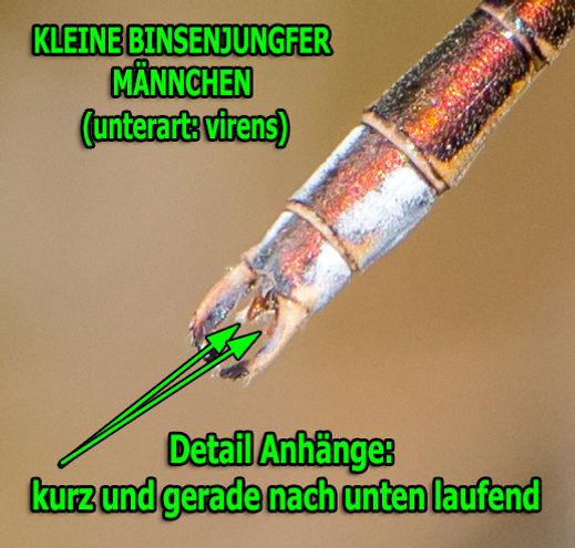 virens - Kleine Bins. - 19.09.2019