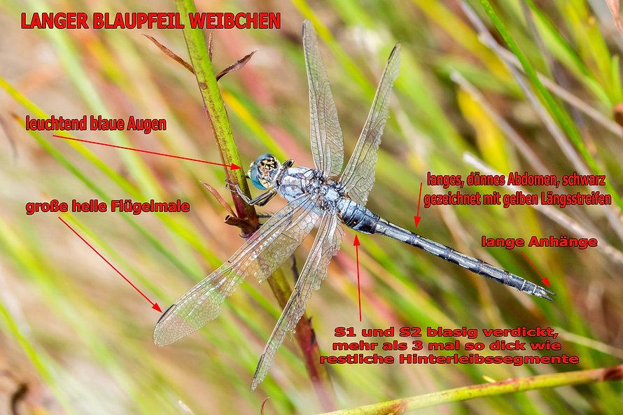 W100B - Langer Blaupfeil - 18.09.2019 -
