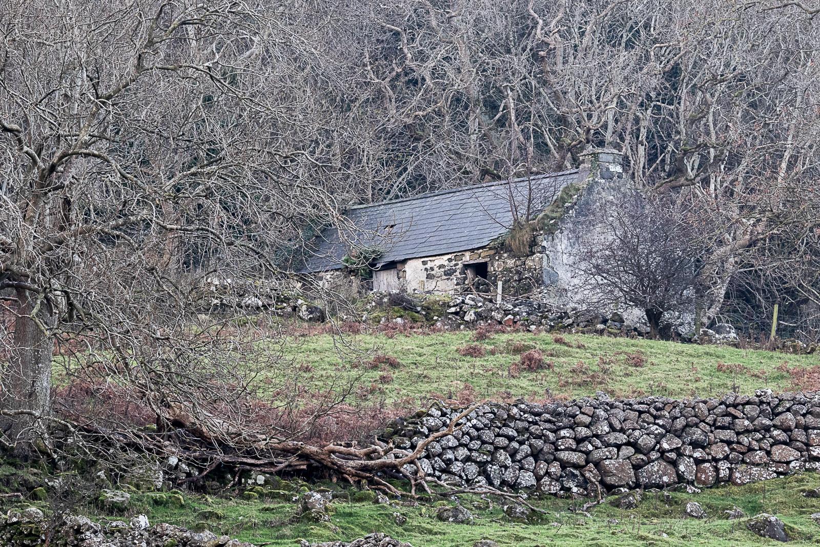 'Forest Reclaim' by Iris Rainey (6 marks)  -  Larne Camera Club