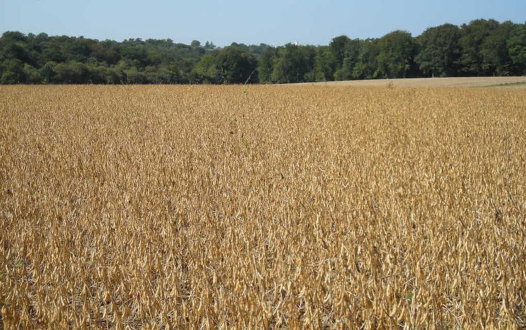 champ agriculture biologique.JPG