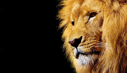 lion-2327225_1920.jpg