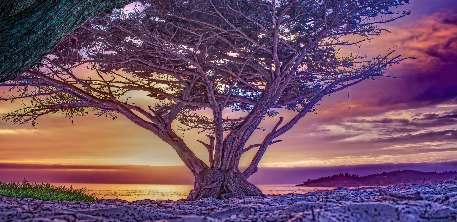 Tree on the White Sand 09-28-15