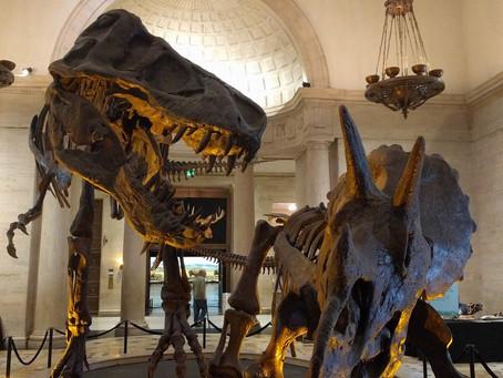 Saturday Day Trip: Natural History Museum