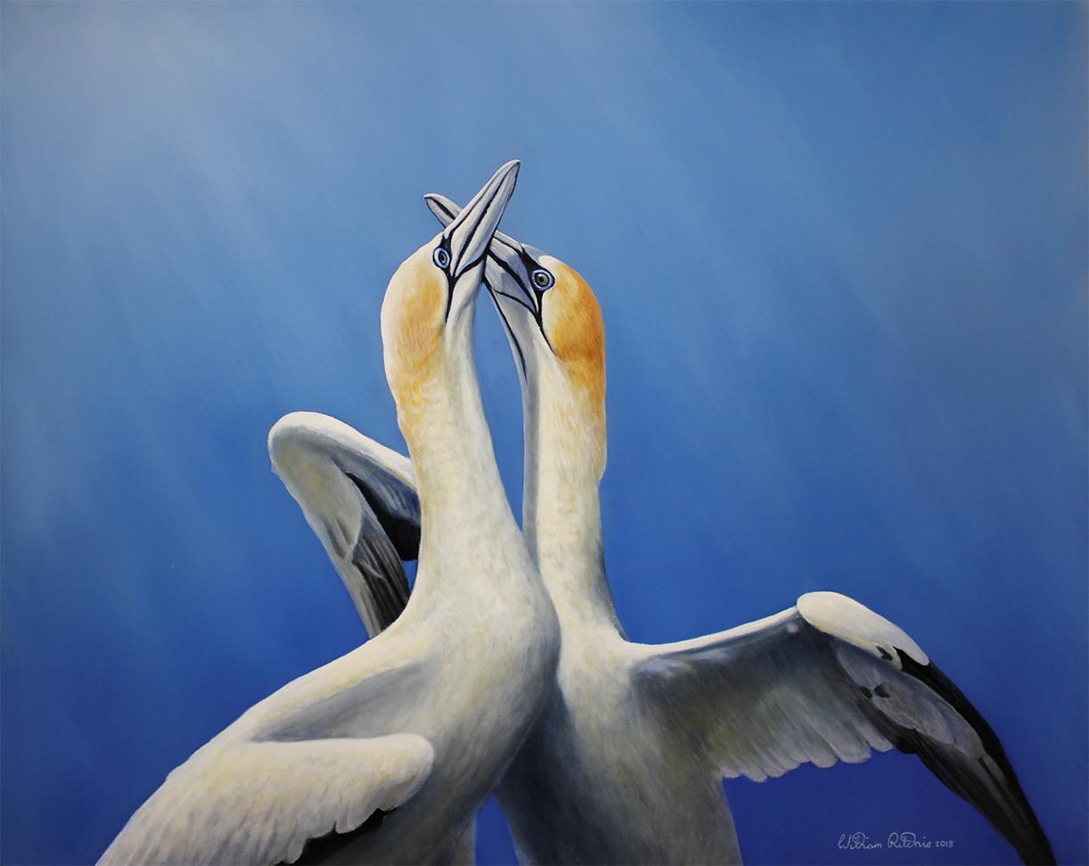 Greeting gannets