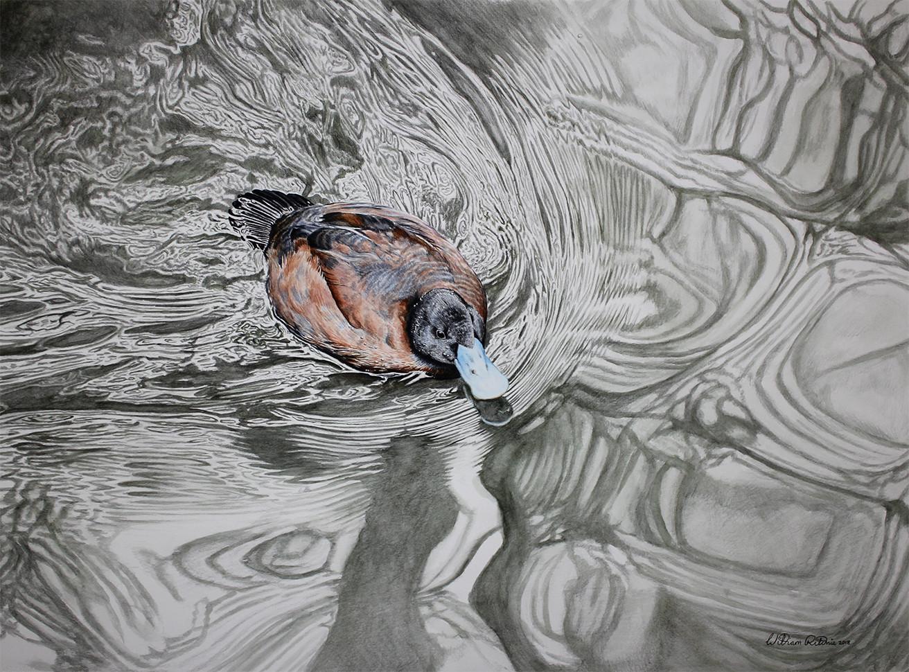 Bluebill duck