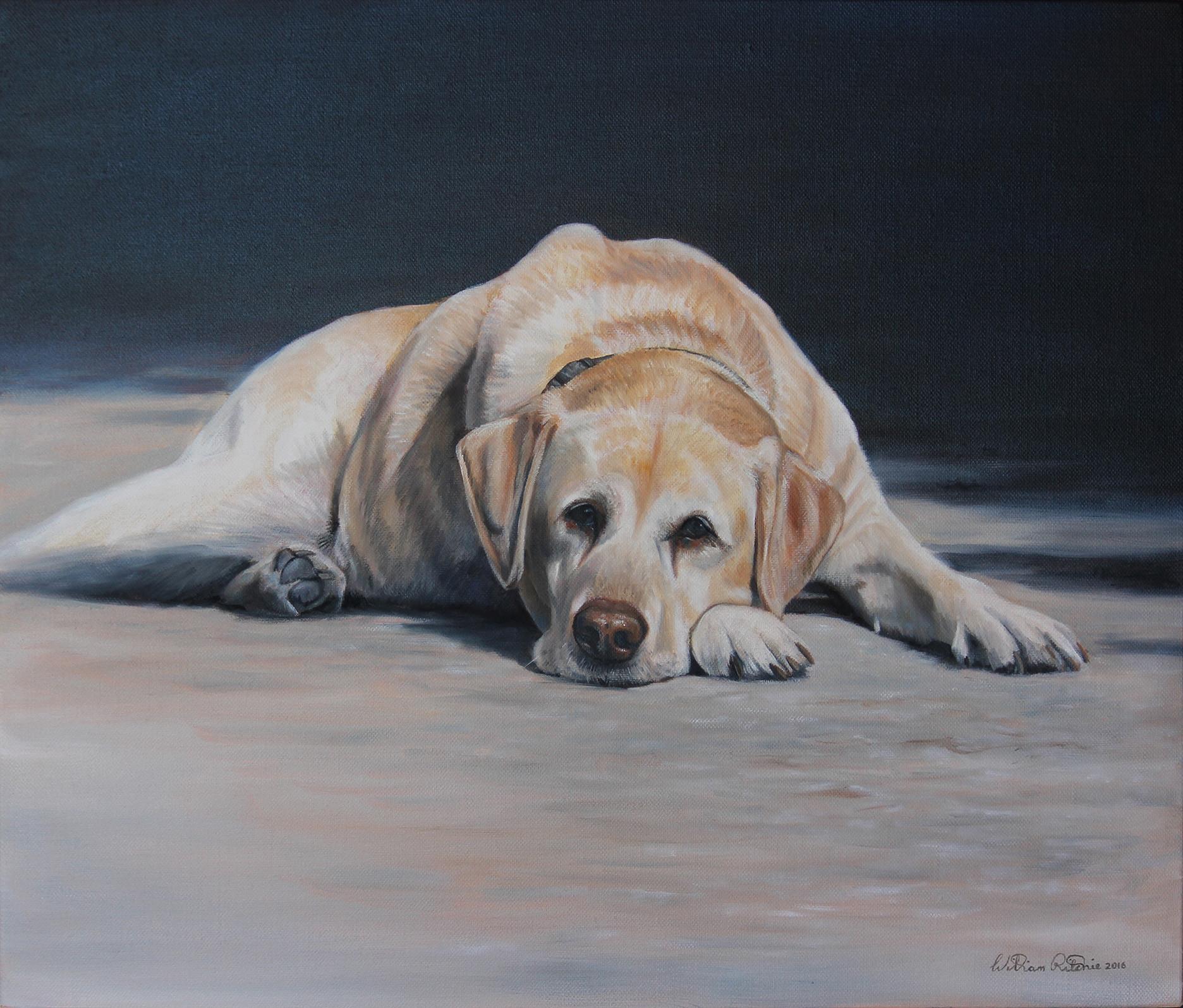 Sally the Australian Army Explosive Detection Dog