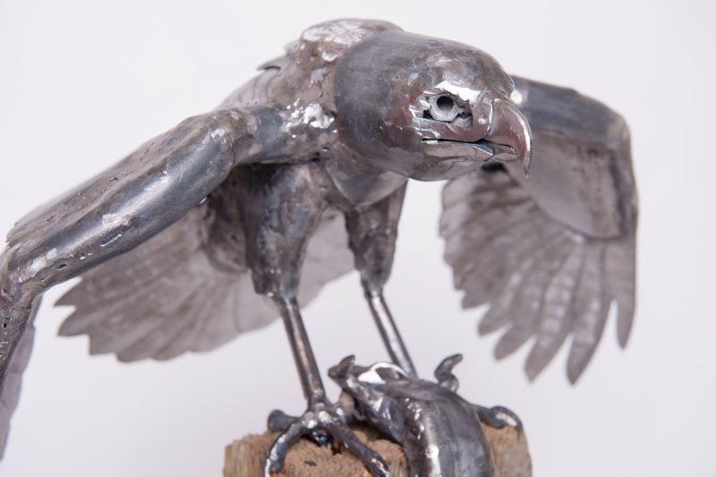 Mantling Hawk