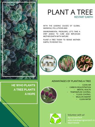 Plant A Tree C