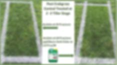 Crabgrass Control.jpg