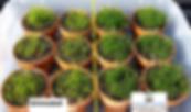 Seedling-Study-2-1024x604.png