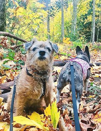 Llandover woods in it's Autumn glory