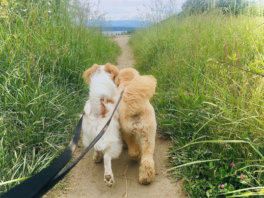 The pups love navigating the sandy trail