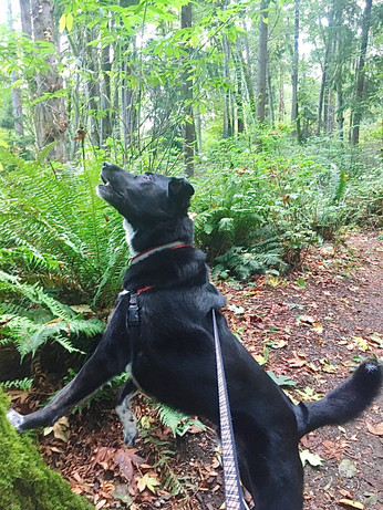 Squirrel on Carkeek's south ridge trail