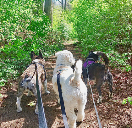 Small dog social club out on an adventure