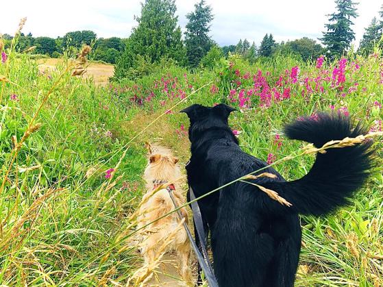 The grass meadows await!