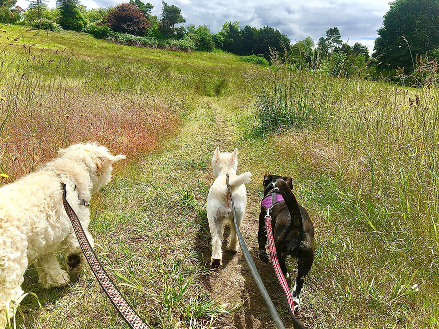 3 dogs walking in a colorful grass field