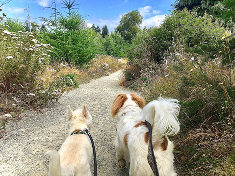 Amazing native plants on this trail at Discovery Park