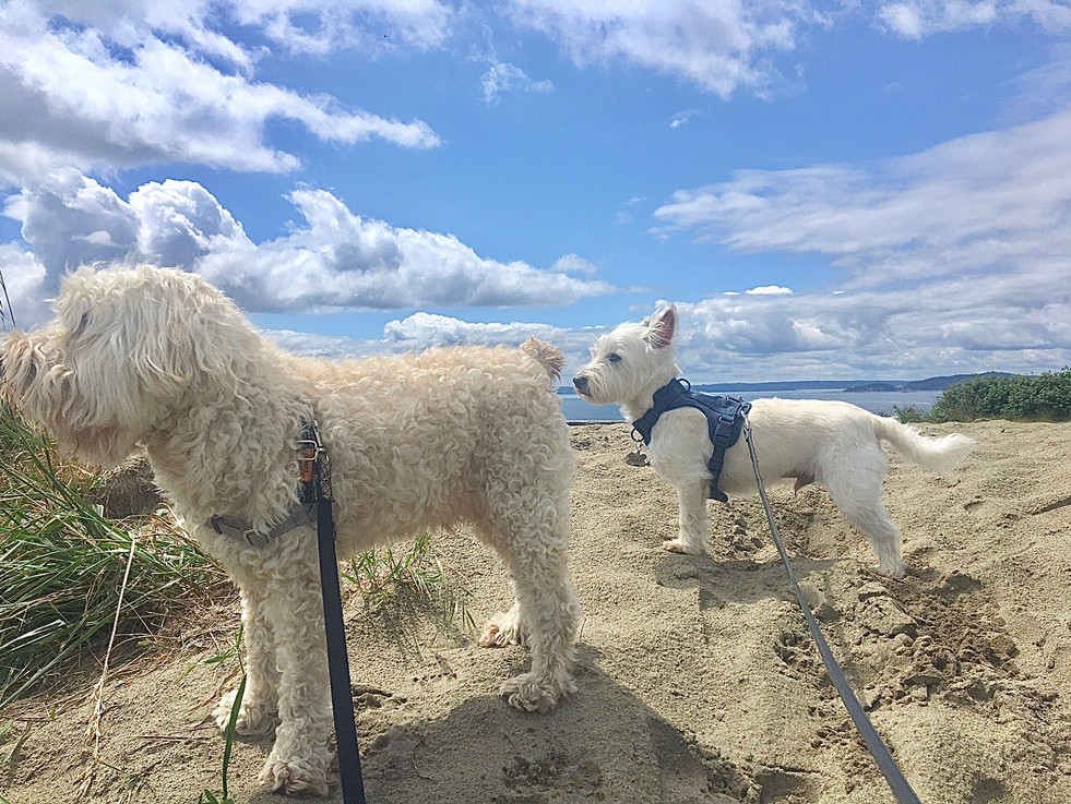 All the pups love the sand dune!