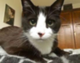 Tuxedo cat client
