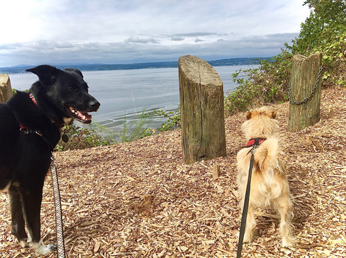 Taking in the fresh breezes off the water at a Discovery Park look out