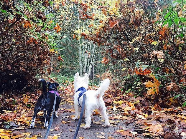 Fall foliage at Llandover