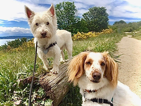 two dogs on a bluff with water view