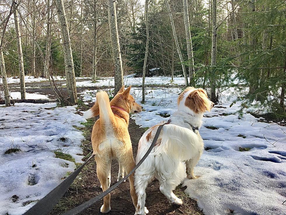 A beautiful wintery day for treking